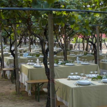 vineyard venue 4