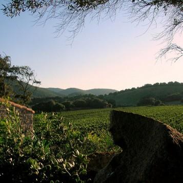 vineyard venue sardinia 1